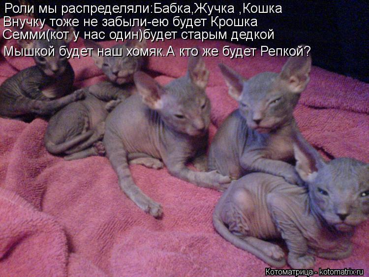 Котоматрица: Роли мы распределяли:Бабка,Жучка ,Кошка Внучку тоже не забыли-ею будет Крошка Семми(кот у нас один)будет старым дедкой Мышкой будет наш хомя