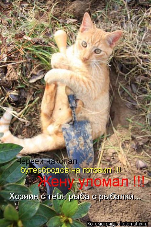 Котоматрица: Червей накопал ! бутербродов на готовил !!! Жену уломал !!! Хозяин с тебя рыба с рыбалки...