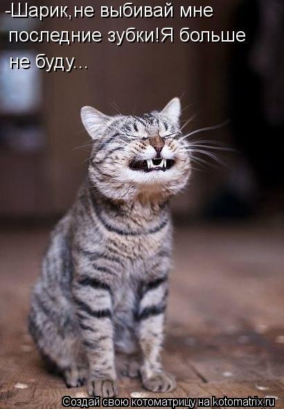 Котоматрица: -Шарик,не выбивай мне  последние зубки!Я больше не буду...