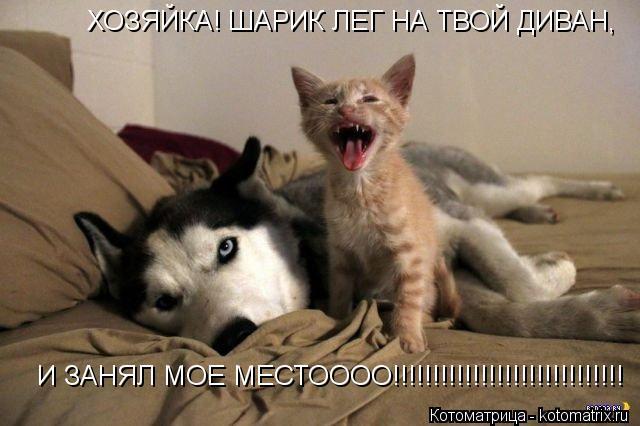 Котоматрица: ХОЗЯЙКА! ШАРИК ЛЕГ НА ТВОЙ ДИВАН, И ЗАНЯЛ МОЕ МЕСТОООО!!!!!!!!!!!!!!!!!!!!!!!!!!!!!