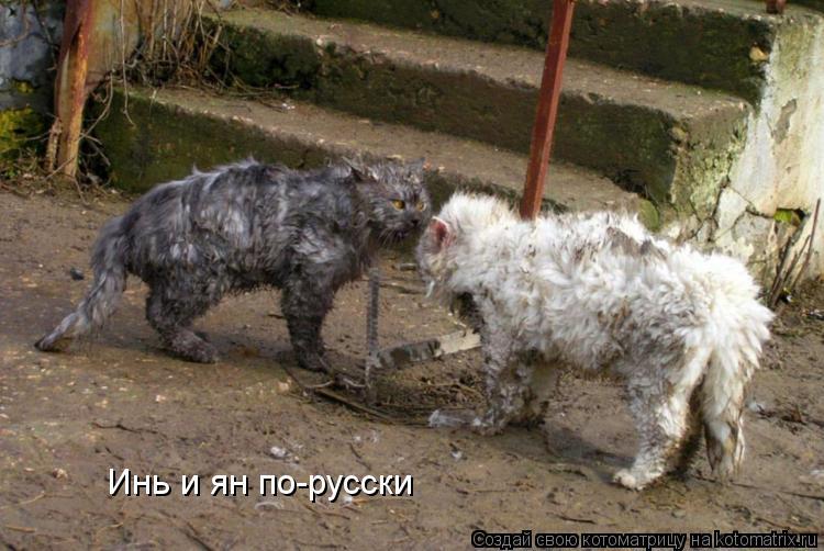 Котоматрица: Инь и ян по-русски