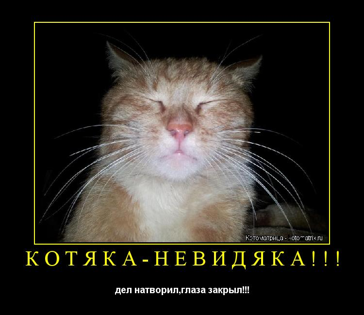 Котоматрица: КОТЯКА-НЕВИДЯКА!!! дел натворил,глаза закрыл!!!
