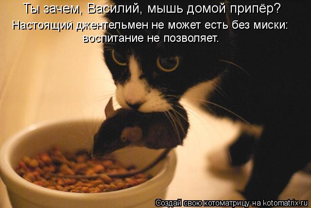 Котоматрица: Ты зачем, Василий, мышь домой припёр? Настоящий джентельмен не может есть без миски: воспитание не позволяет.