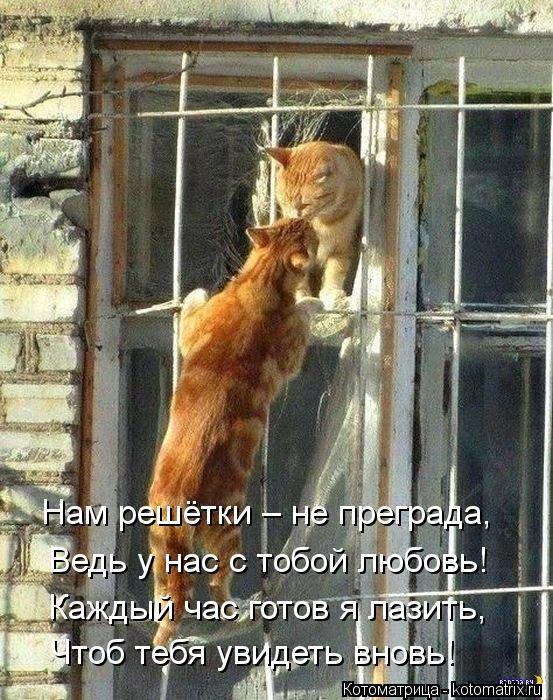 Котоматрица: Чтоб тебя увидеть вновь! Каждый час готов я лазить, Ведь у нас с тобой любовь! Нам решётки – не преграда,