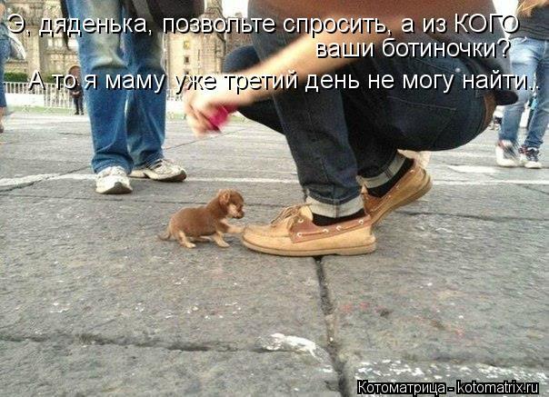 Котоматрица: Э, дяденька, позвольте спросить, а из КОГО ваши ботиночки? А то я маму уже третий день не могу найти..