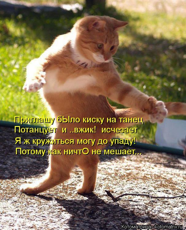 Котоматрица: Приглашу бЫло киску на танец Потанцует  и ..вжик!  исчезает Я ж кружиться могу до упаду! Потому как ничтО не мешает...