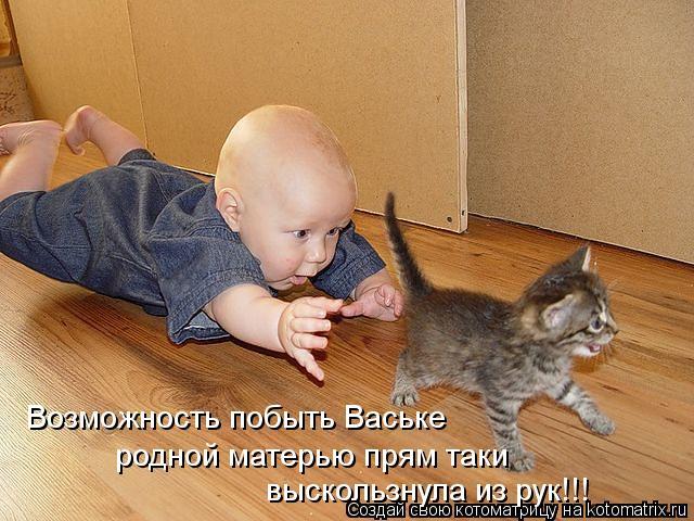Котоматрица: Возможность побыть Ваське родной матерью прям таки выскользнула из рук!!!