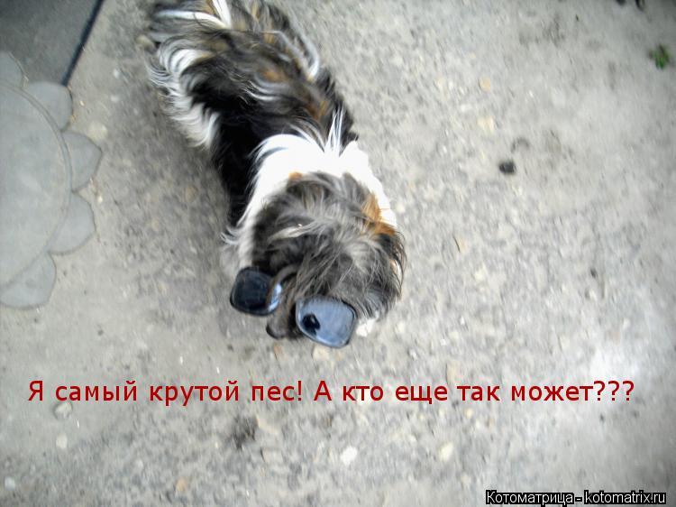 Котоматрица: Я самый крутой пес! А кто еще так может???