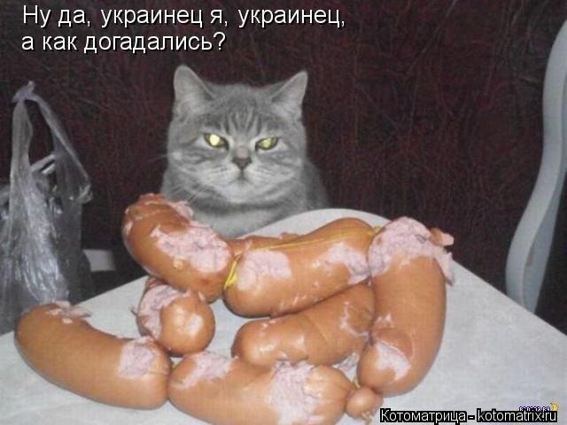 Котоматрица: Ну да, украинец я, украинец, а как догадались?