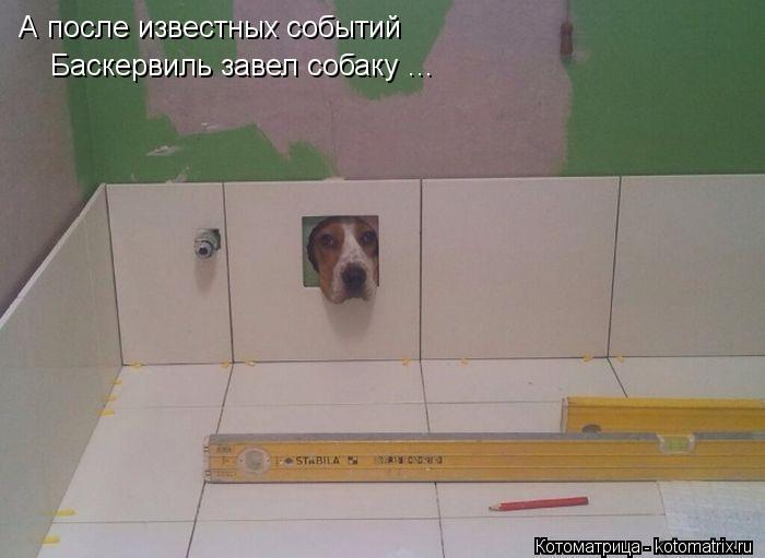 Котоматрица: А после известных событий  Баскервиль завел собаку ...