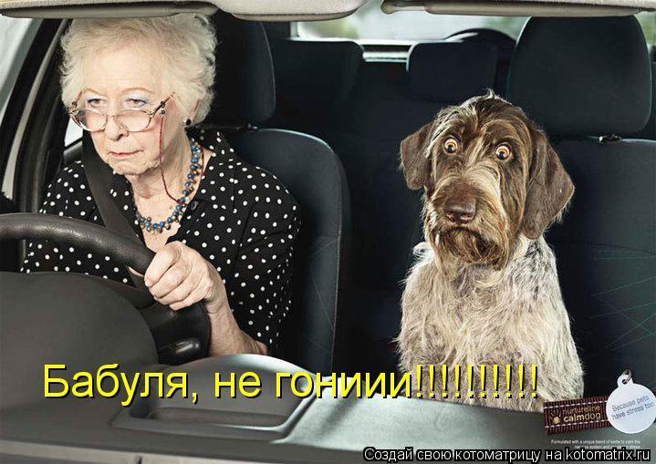 Котоматрица: Бабуля, не гониии!!!!!!!!!!