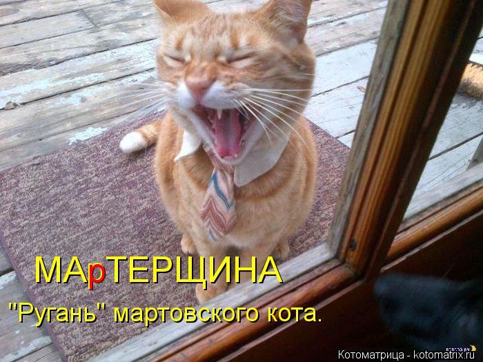 "Котоматрица: МАрТЕРЩИНА ""Ругань"" мартовского кота. р"