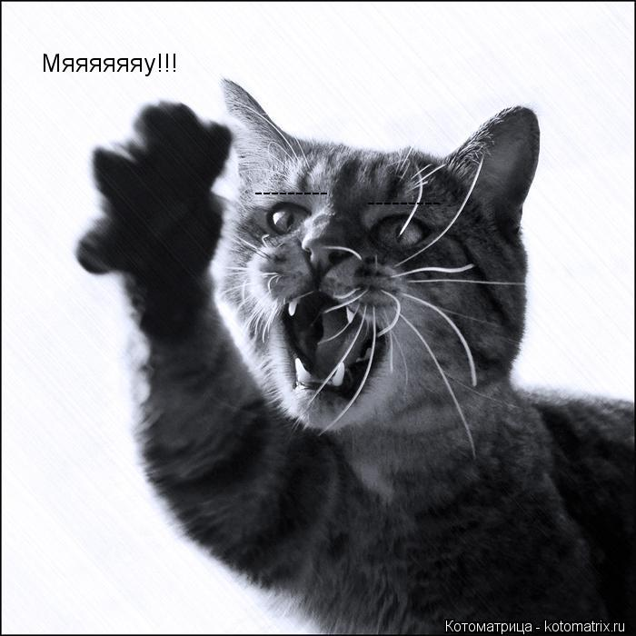 Котоматрица: Мяяяяяяу!!! --------- ---------