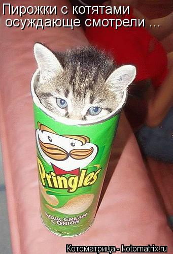 Котоматрица: Пирожки с котятами осуждающе смотрели ...