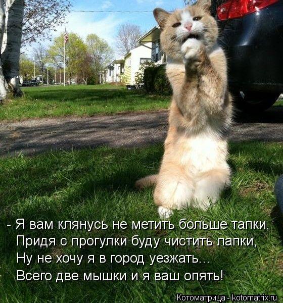 Котоматрица: - Я вам клянусь не метить больше тапки, Придя с прогулки буду чистить лапки, Ну не хочу я в город уезжать... Всего две мышки и я ваш опять!