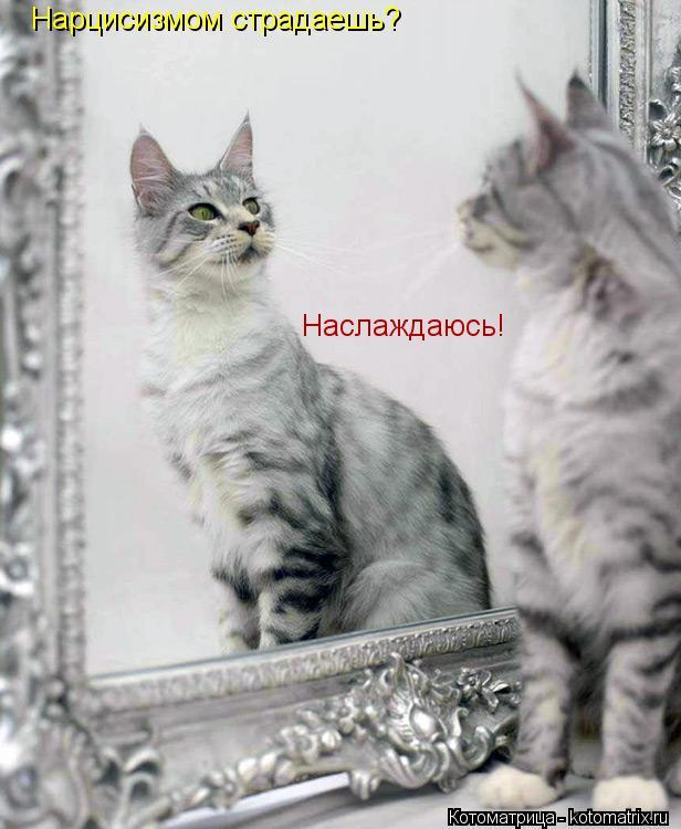 Котоматрица: Нарцисизмом страдаешь? Наслаждаюсь!
