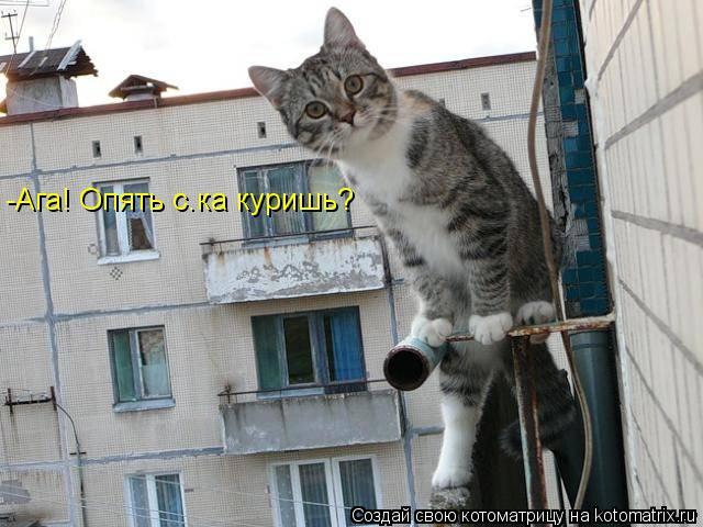 Котоматрица: -Ага! Опять с.ка куришь?