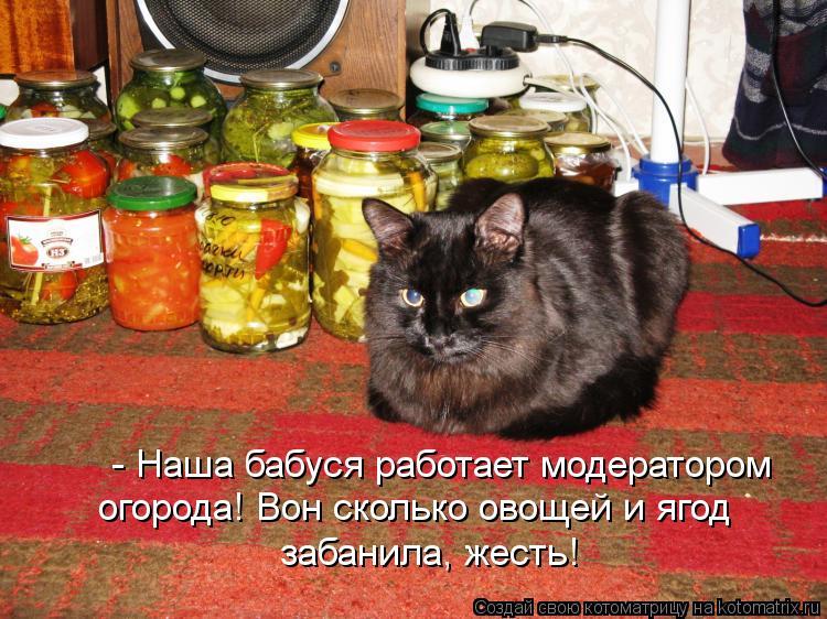 Котоматрица: - Наша бабуся работает модератором  огорода! Вон сколько овощей и ягод забанила, жесть!