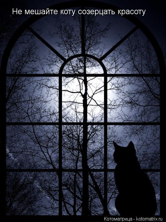 Котоматрица: Не мешайте коту созерцать красоту