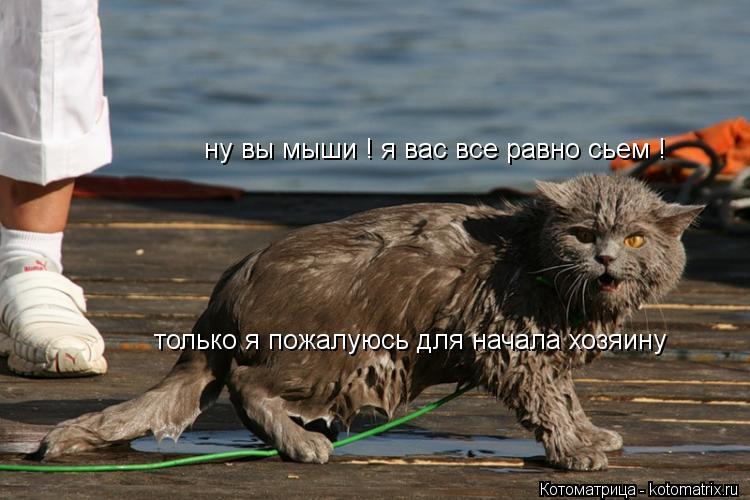 Котоматрица: ну вы мыши ! я вас все равно сьем ! только я пожалуюсь для начала хозяину