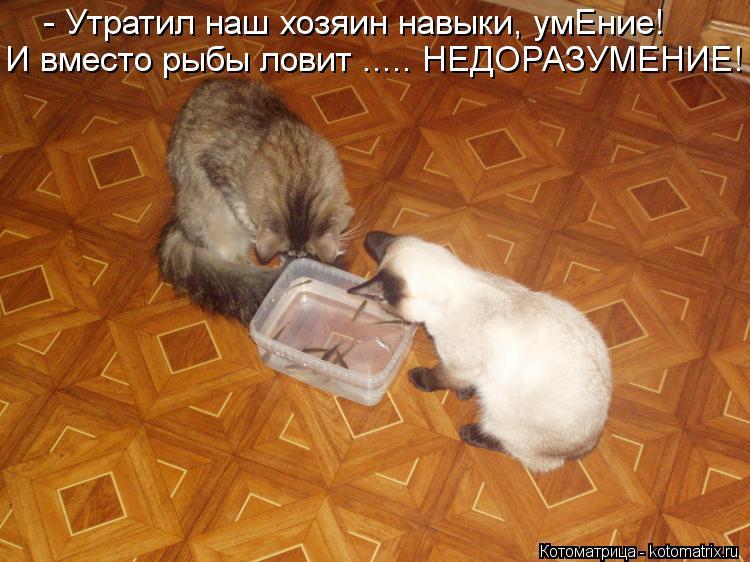 Котоматрица: - Утратил наш хозяин навыки, умЕние! И вместо рыбы ловит ..... НЕДОРАЗУМЕНИЕ!