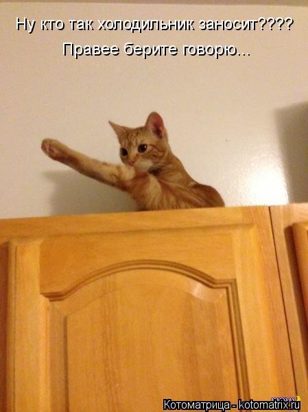 Котоматрица: Ну кто так холодильник заносит???? Правее берите говорю...