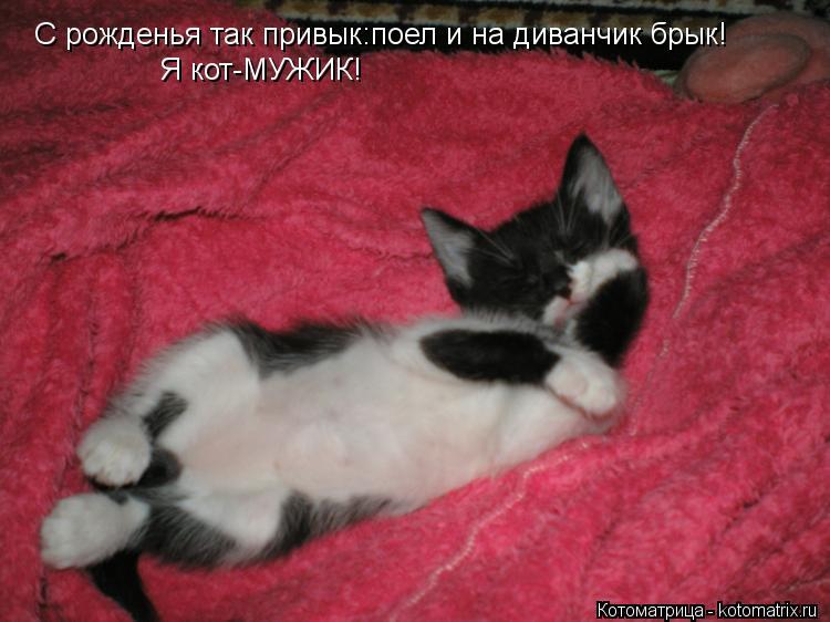 Котоматрица: С рожденья так привык:поел и на диванчик брык! Я кот-МУЖИК!