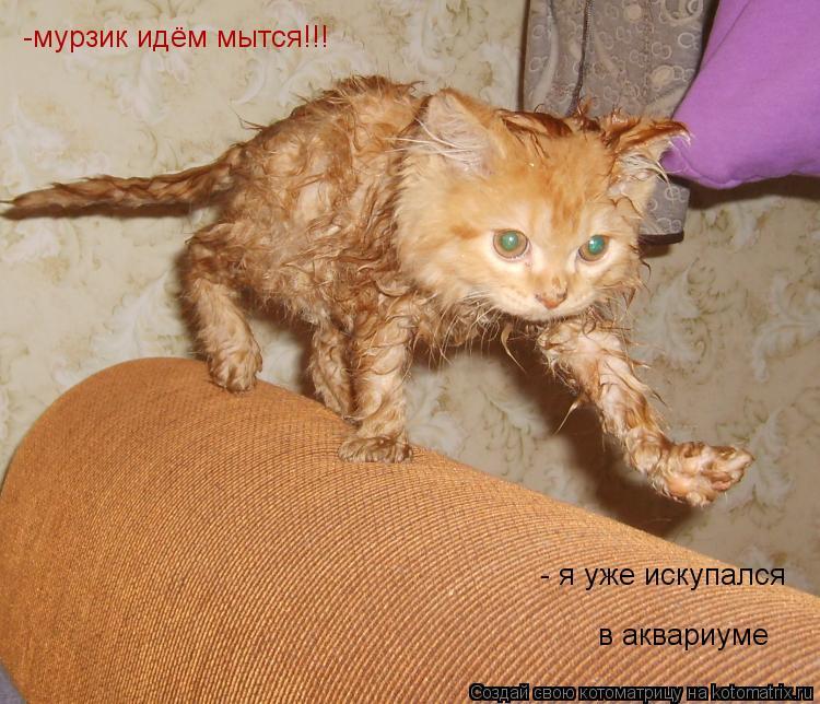 Котоматрица: -мурзик идём мытся!!! - я уже искупался в аквариуме