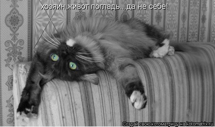 Котоматрица: хозяин,живот погладь...да не себе!