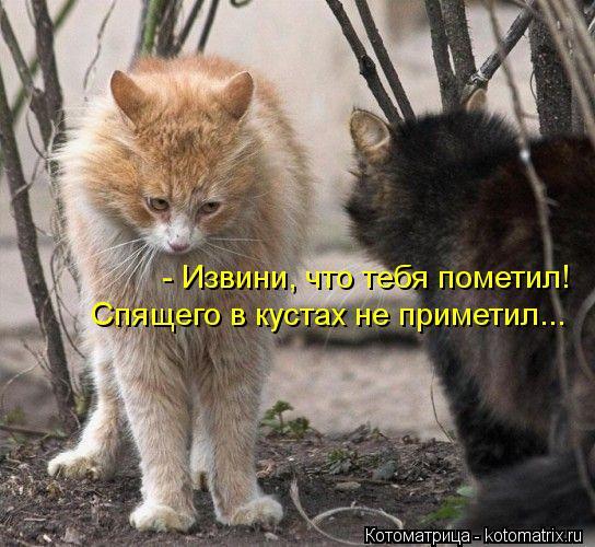 Котоматрица: - Извини, что тебя пометил! Спящего в кустах не приметил...
