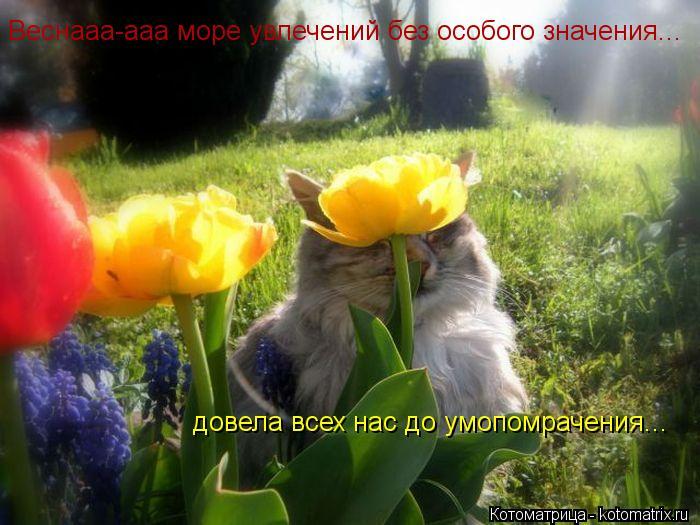 Котоматрица: Веснааа-ааа море увлечений без особого значения... довела всех нас до умопомрачения...