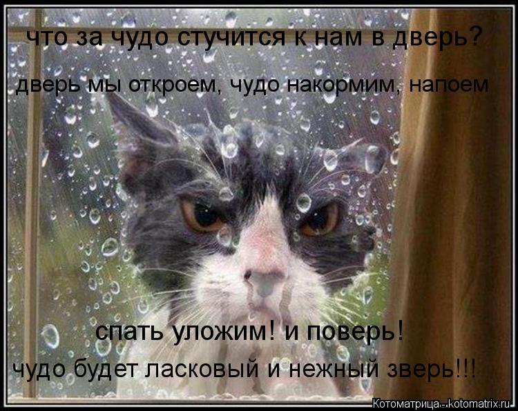 Котоматрица: что за чудо стучится к нам в дверь? дверь мы откроем, чудо накормим, напоем спать уложим! и поверь!  чудо будет ласковый и нежный зверь!!!
