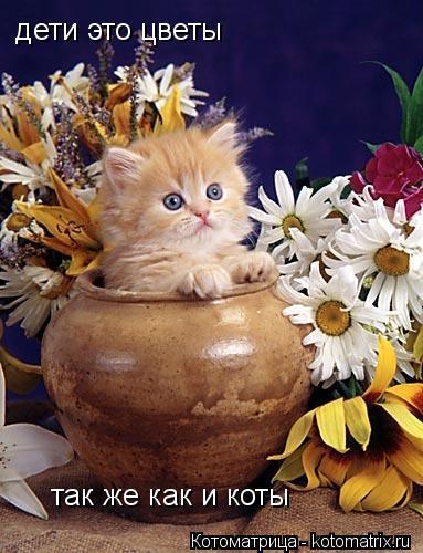 Котоматрица: дети это цветы так же как и коты