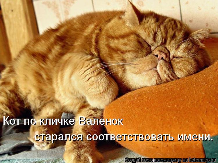 Котоматрица: Кот по кличке Валенок  старался соответствовать имени.