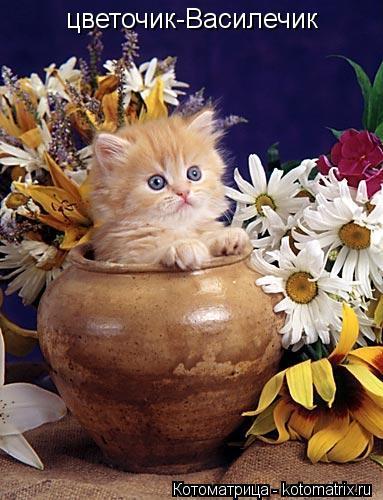Котоматрица: цветочик-Василечик