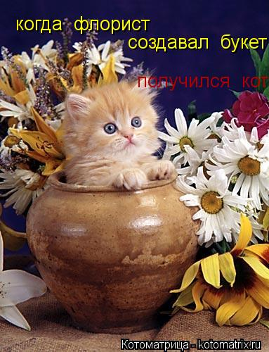 Котоматрица: когда  флорист создавал  букет получился  кот