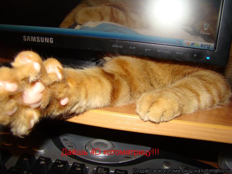 Котоматрица: Даёшь 4D котоматрицу!!!