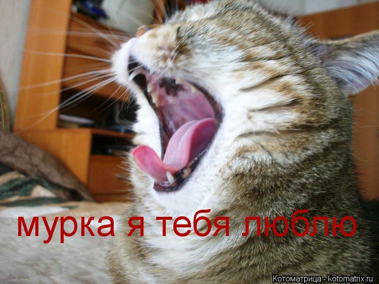 Котоматрица: мурка я тебя люблю