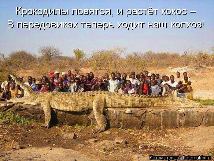Котоматрица: В передовиках теперь ходит наш колхоз! Крокодилы ловятся, и растёт кокос –