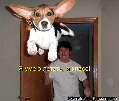 Котоматрица: Я умею летать, и класс!