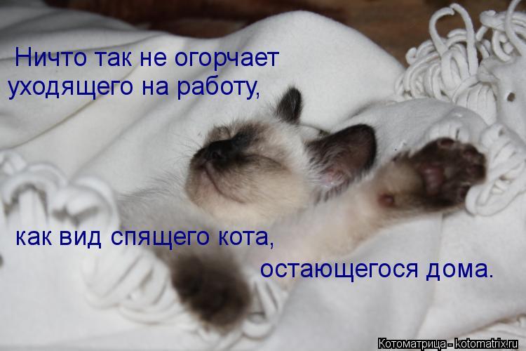 Котоматрица: Ничто так не огорчает уходящего на работу, как вид спящего кота, остающегося дома.