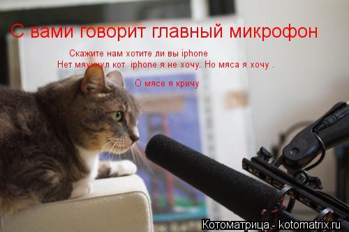 Котоматрица: С вами говорит главный микрофон  Скажите нам хотите ли вы iphone Нет мяукнул кот  iphone я не хочу. Но мяса я хочу . О мясе я кричу
