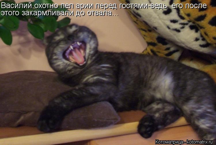 Котоматрица: Василий охотно пел арии перед гостями-ведь  его после этого закармливали до отвала...