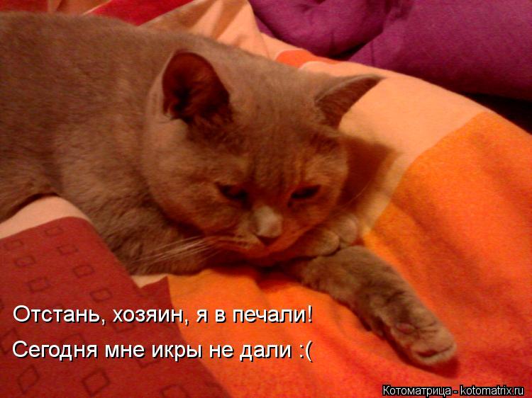 Котоматрица: Отстань, хозяин, я в печали! Сегодня мне икры не дали :(  Отстань, хозяин, я в печали!  Сегодня мне икры не дали :(