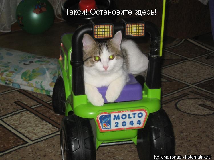 Котоматрица: Такси! Остановите здесь!