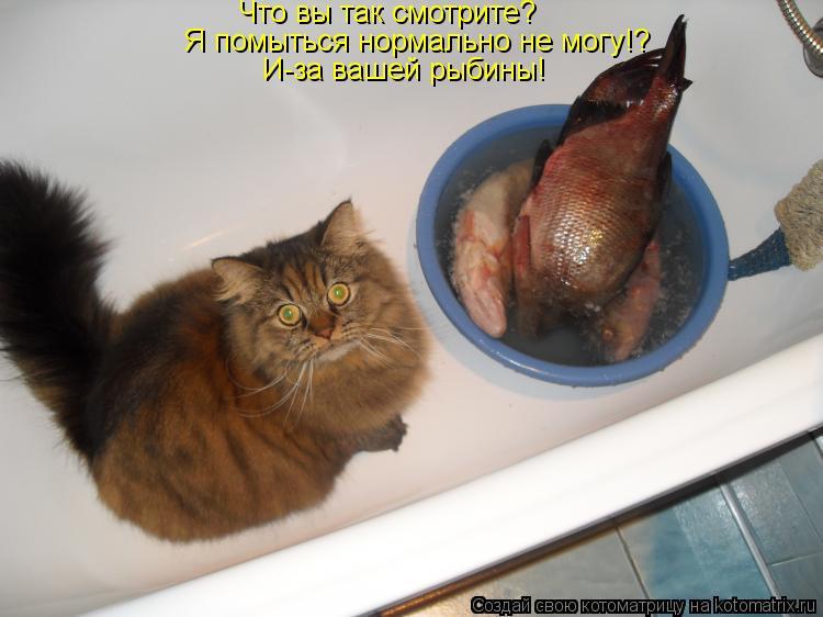 Котоматрица: Что вы так смотрите? Я помыться нормально не могу!? И-за вашей рыбины!
