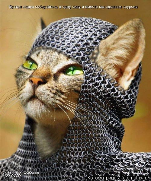 Котоматрица: Братья кошки собирайтесь в одну силу и вместе мы одолеем саурона