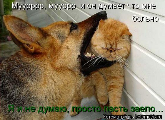 Котоматрица: Муурррр, мууррр, и он думает что мне  больно Я и не думаю, просто пасть заело...