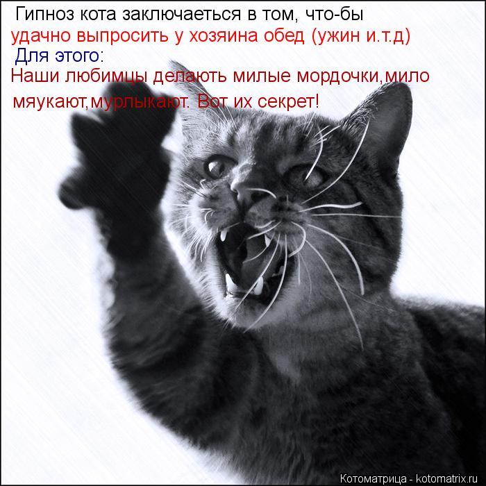 Котоматрица: Гипноз кота заключаеться в том, что-бы  удачно выпросить у хозяина обед (ужин и.т.д)  Для этого: Наши любимцы делають милые мордочки,мило  мяук