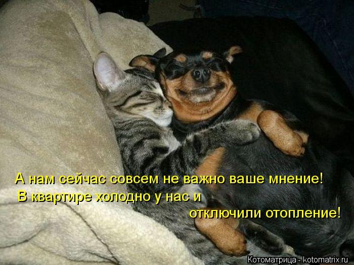 Котоматрица: А нам сейчас совсем не важно ваше мнение! В квартире холодно у нас и  отключили отопление!